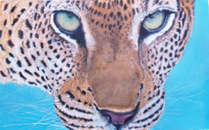 Eyes of the leopard